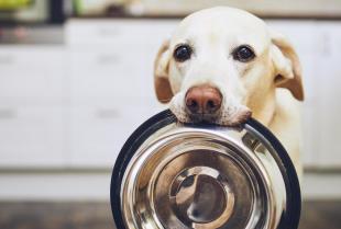 Sterylizacja psów