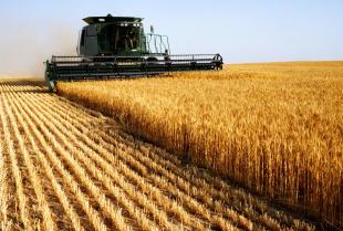 Kombajn – maszyna rolnicza o szerokim zastosowaniu