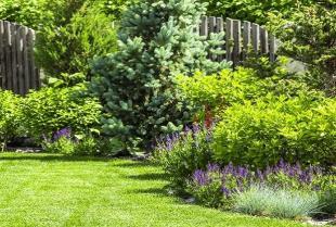 Jakie rodzaje traw ozdobnych wybrać do ogrodu?
