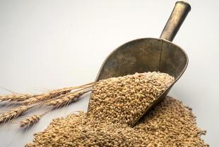 Czy zaprawianie nasion jest konieczne?