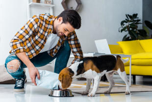 Zdroworozsądkowe, a zarazem prawidłowe żywienie psa