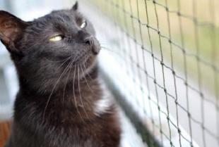 Dlaczego właściciele kotów powinni osiatkować balkon?