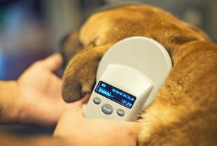 Dlaczego warto zdecydować się na elektroniczne znakowanie zwierząt towarzyszących?
