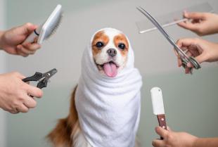 W jaki sposób przygotować psa do wizyty u groomera?