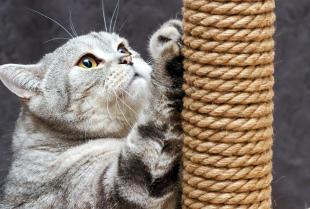 Jak wybrać idealny drapak dla kota?
