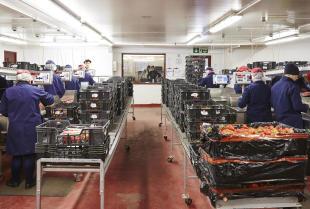 Jak dbać o czystość w zakładzie z godnie z GMP i GHP?