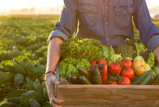 Czym różni się żywność konwencjonalna od żywności ekologicznej?