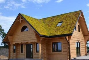Największe zalety zielonych dachów