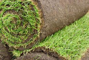 Producent trawy w rolce