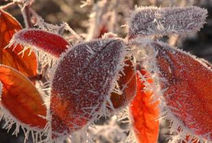Borówka amerykańska – co wiesz na temat tej rośliny?