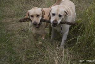 Kiedy potrzebne jest szkolenie behawioralne psów?