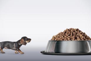 Najczęstsze błędy w żywieniu psa